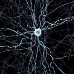 отделы нервной системы человека