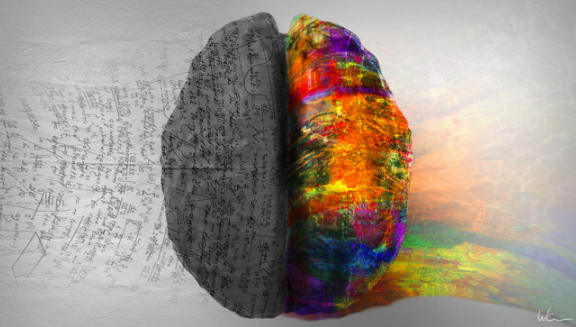 левое и правое полушария мозга
