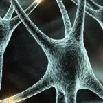 Функции нервной системы