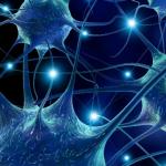 Парасимпатический отдел нервной системы