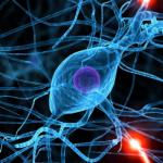 Симпатический отдел нервной системы