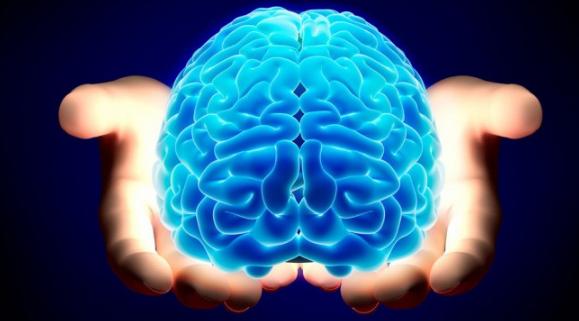 мозг человека строение и функции