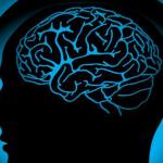 Мозжечок головного мозга человека
