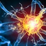 как работает нервная система человека