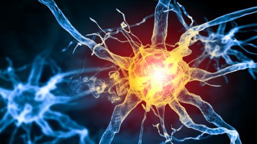 Картинки по запросу нервная система человека