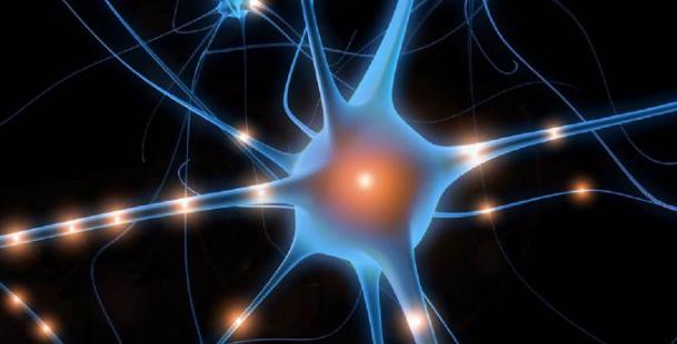 нервные узлы в нервной системе