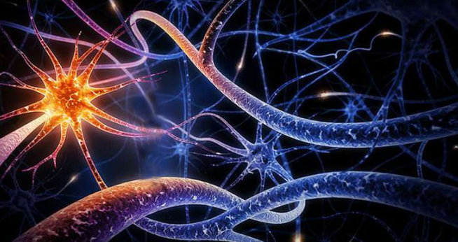 Вегетативный отдел нервной системы